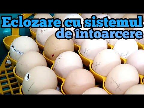 Oxiuros tratamiento piperazina. Cât de repede mor helminti din pirantel Prevenirea oului de helmint