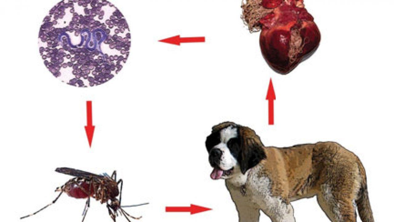 remediu împotriva tuturor tipurilor de viermi