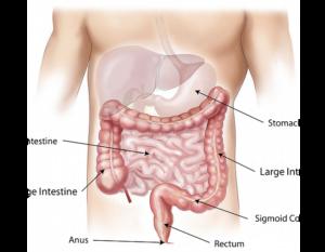 viermi cum să îndepărteze stomacul