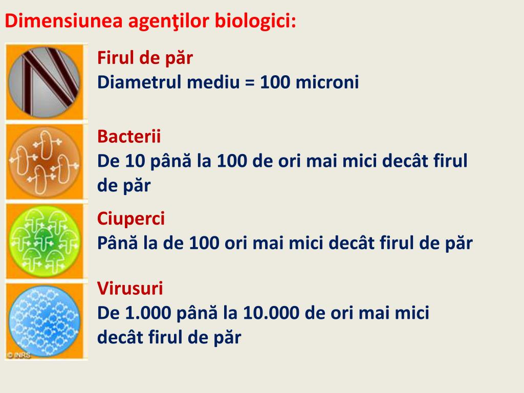Microbiologia thecroppers.ro