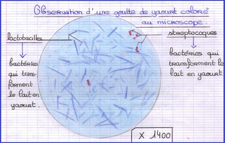 toxine definition svt 3eme vaccino x papilloma