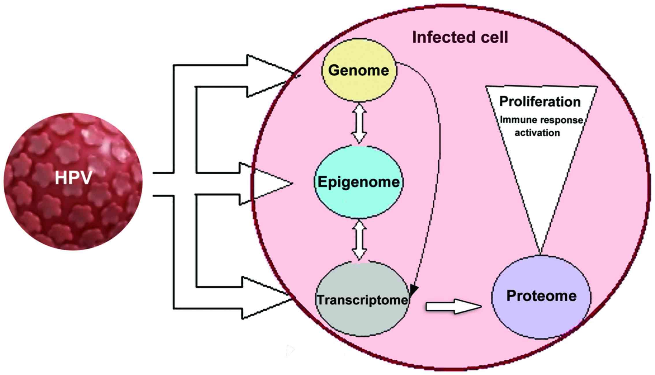 human papillomavirus infection esophageal cancer