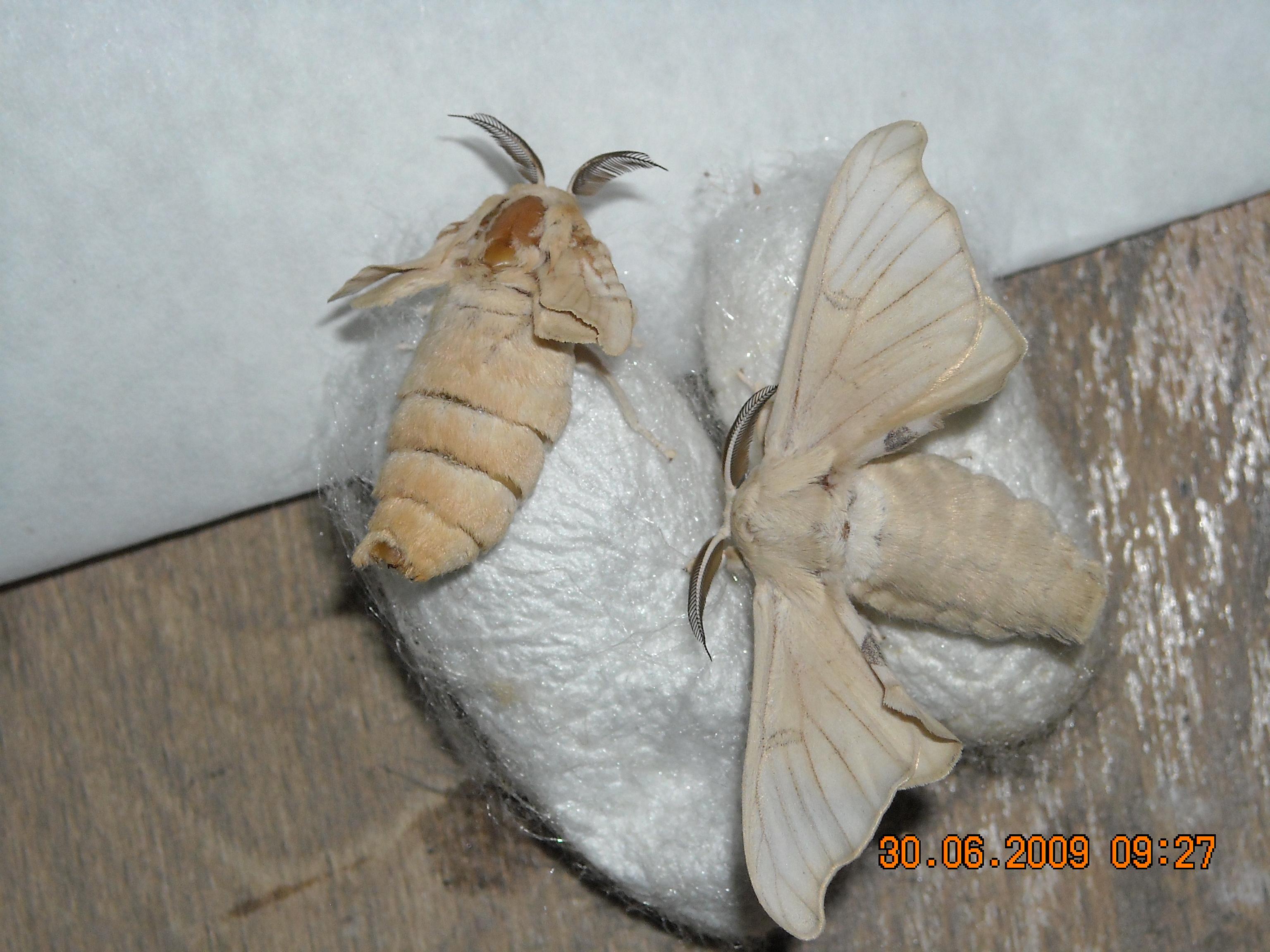 Cercetarea viermilor ouă. Google претрага књига
