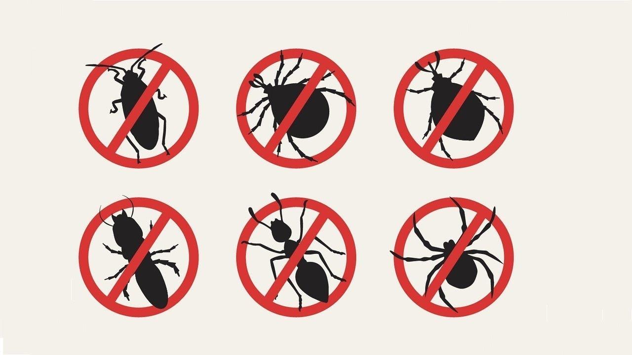 Aplicație pentru recunoașterea insectelor | .