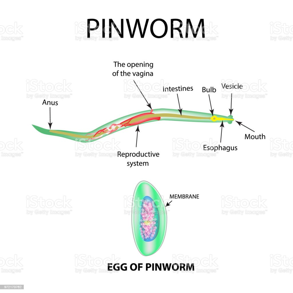 cum se tratează verucile genitale în vagin