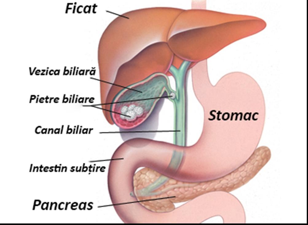tratamentul simptomelor viermilor hepatici)