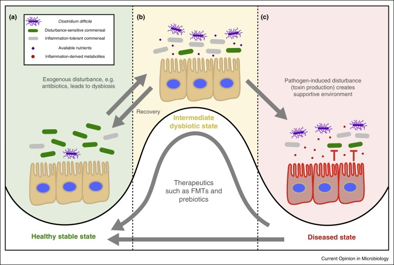 Dysbiosis probiotics, Dysbiosis probiotics