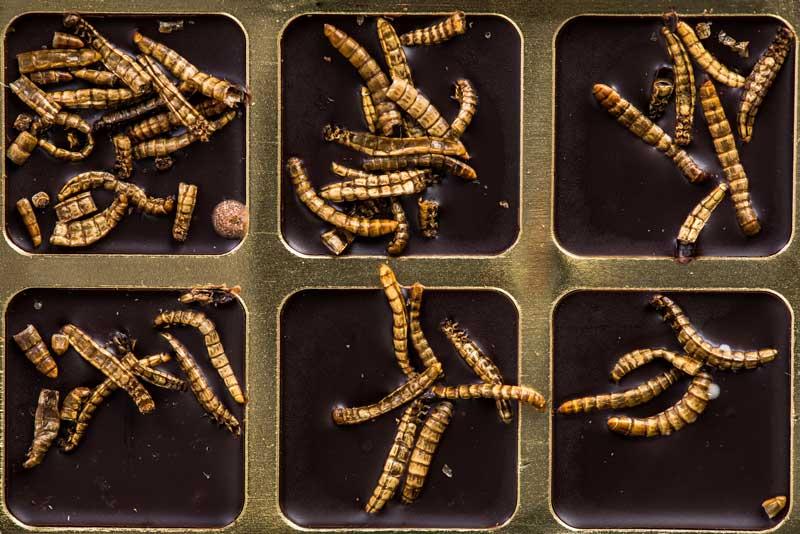 Paraziti intestinali in scaun. Paraziți si viermi - ce sunt?
