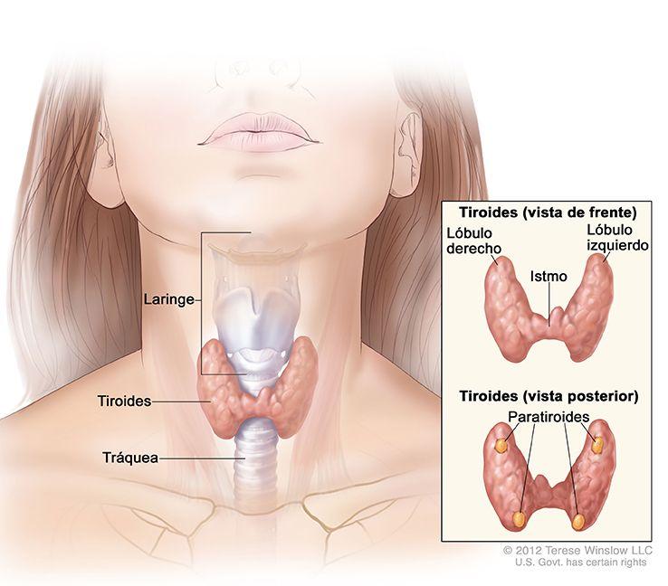 cancer facial que es pancreatic cancer and diarrhea