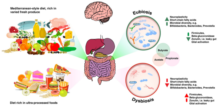 A dysbiosis definition