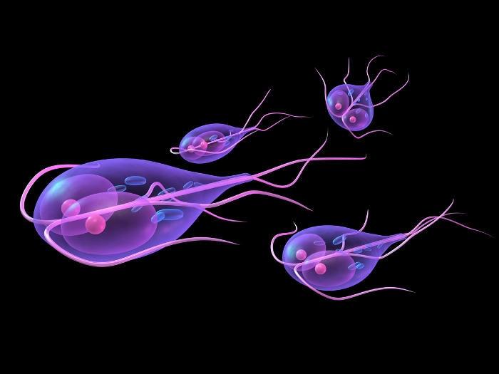 Giardia însărcinată - Giardia – paraziti intestinali