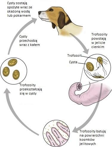cancer perete abdominal papilloma virus haqida